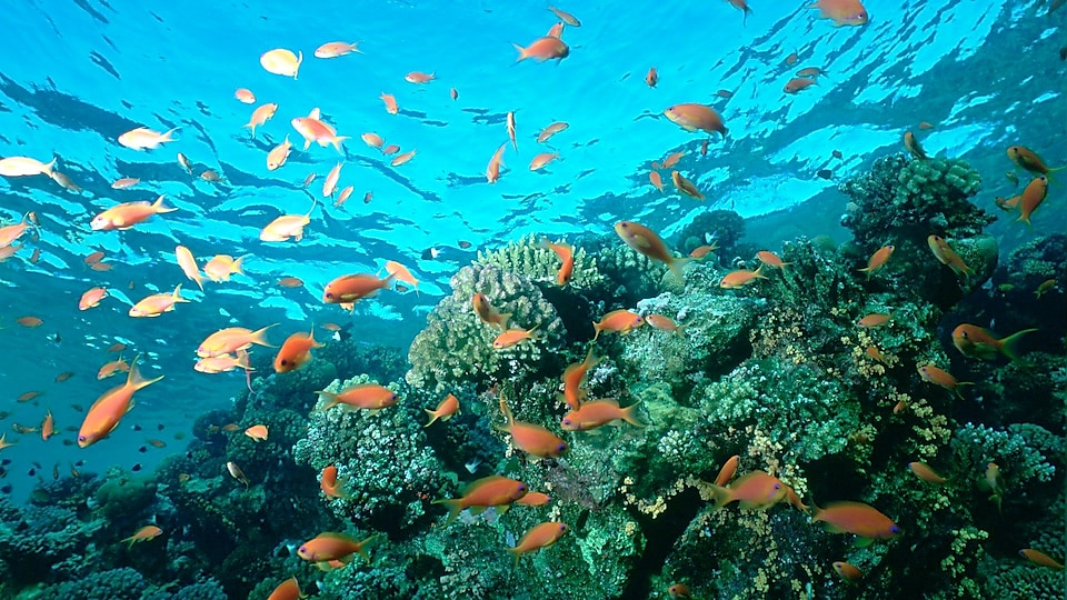 Delegados reanudan conversaciones sobre el nuevo Tratado de Biodiversidad de Alta Mar