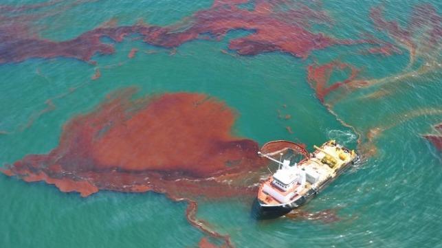 Los impactos en la vida silvestre persisten una década después de la tragedia del Deepwater Horizon