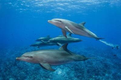 Más de 20 delfines muertos encontrados en la playa de Mauricio cerca del derrame de hidrocarburo