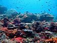 Las restauraciones de arrecifes de coral pueden optimizarse para reducir el riesgo de inundaciones, según un estudio
