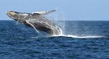 Dieciséis compañías navieras de todo el mundo frenan los buques de carga frente a la costa de California para proteger las ballenas azules y el cielo azul